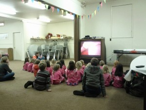 Hug-a-tree video presentation