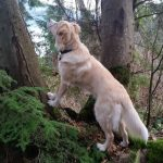 Trail safety for Dog Walkers